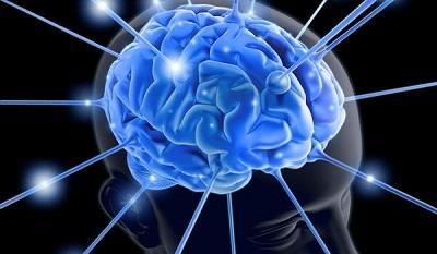 Мозговая активность человека