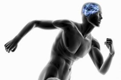 мозговая активность во время упражнений