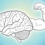 Нервная система регулирует работу мышц