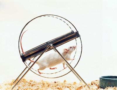 Мыши в колесе