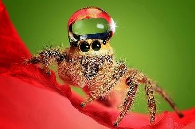 Боязнь пауков - фобия