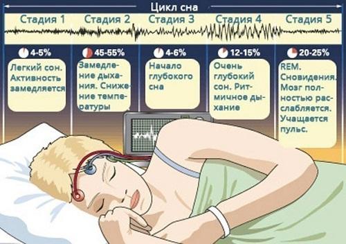 Фазы сна человека по времени