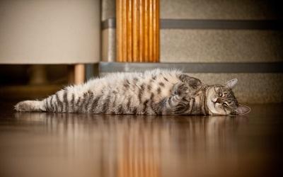 Почему для вашей спины полезно спать на полу
