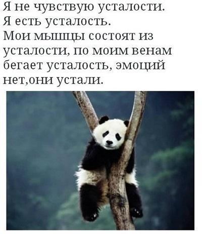 Панда устала