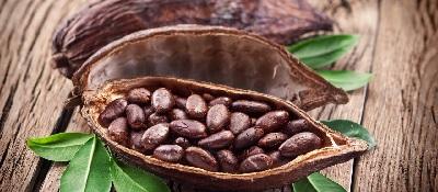 Какао бобы масло