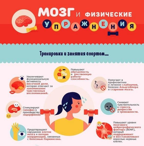 Физические упражнения для мозга