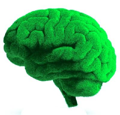 Витамины для мозга и памяти взрослым