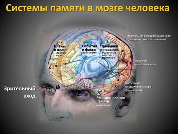 Система памяти человека