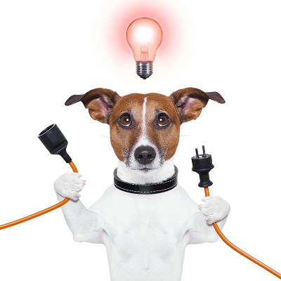 Собаки и электричество