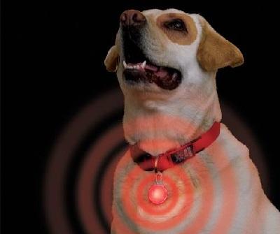 Воздействие тока на собак