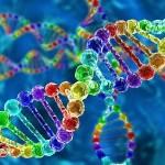 Строение гена человека