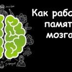 Как работает память мозга