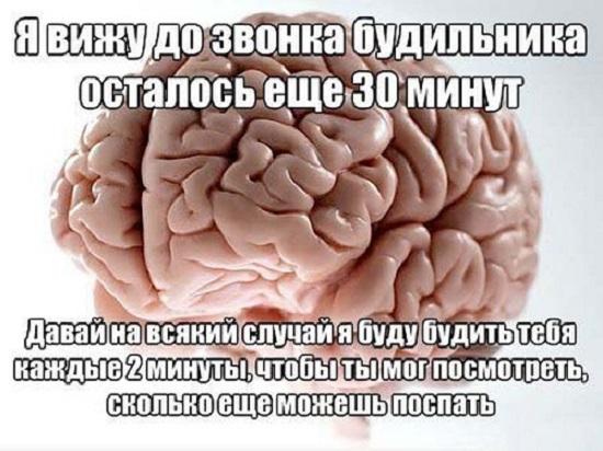 Мозг будильник