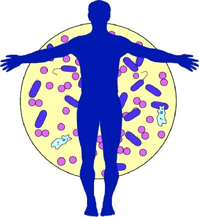 Биотики в организме